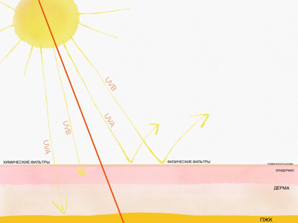 Различие физических и химических солнцезащитных фильтров